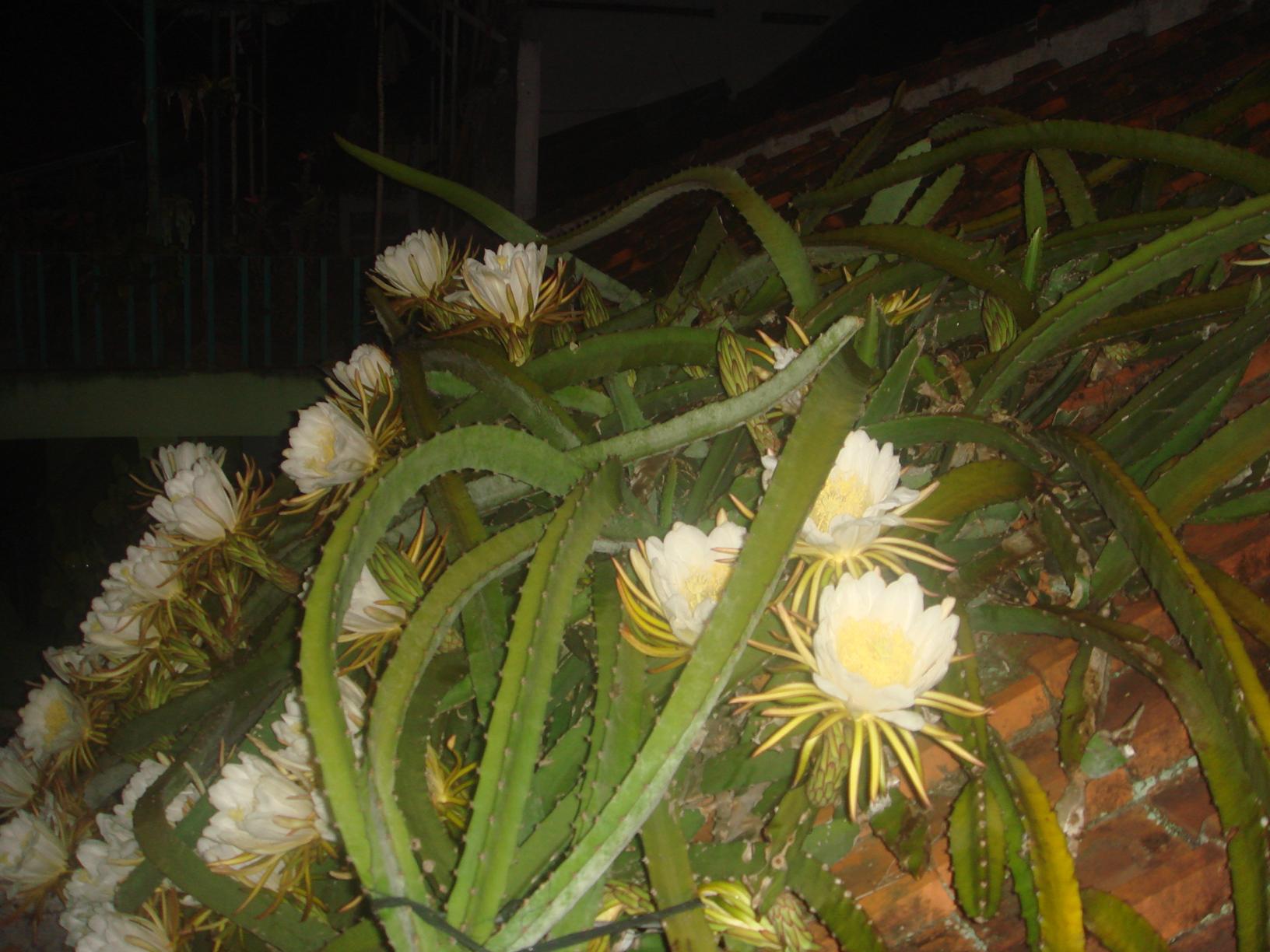 Bunga Di Genteng