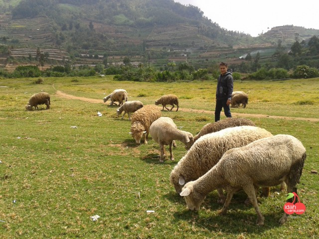 SHAUN THE SHEEP DOMBA DIENG