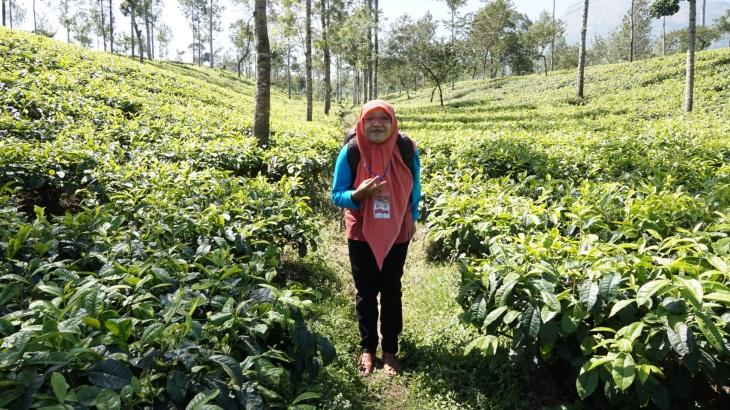 tambi-tea-walk