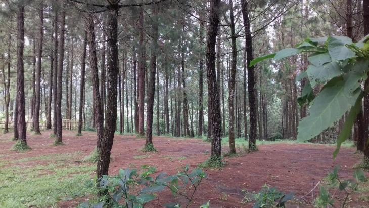 camping_ground[1]